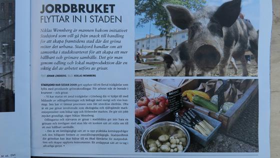 Stadsjords grisar som näringslivsutvecklare - helt rätt!