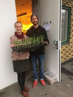 Tove och Marin är Mastersstudenter på Chalmers arkitektur och jagar hållbarhet. Här på¨utlfykt med Slakthusets solrosor som snart flyttar ut permanent.