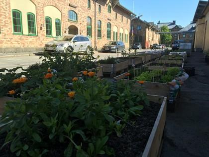 Nu är odlingarna igång utanför Byggnad F.